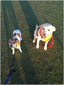 Kenneally dogs